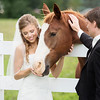Trash the Dress : 4 galleries with 1229 photos
